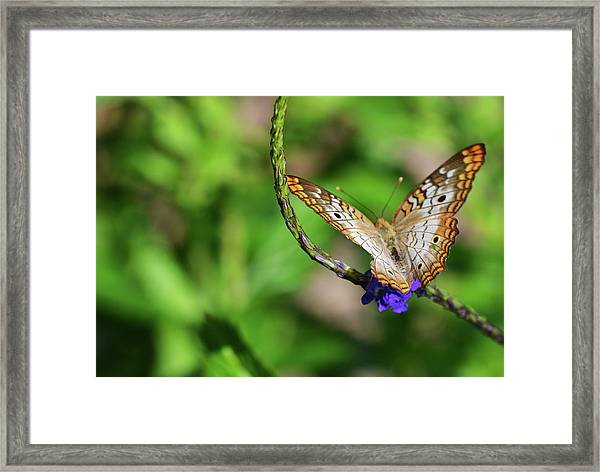 And Away She Goes Framed Print