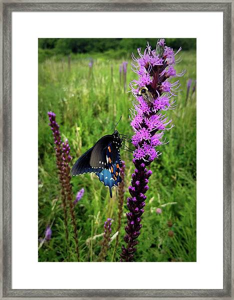 And The Bee Framed Print