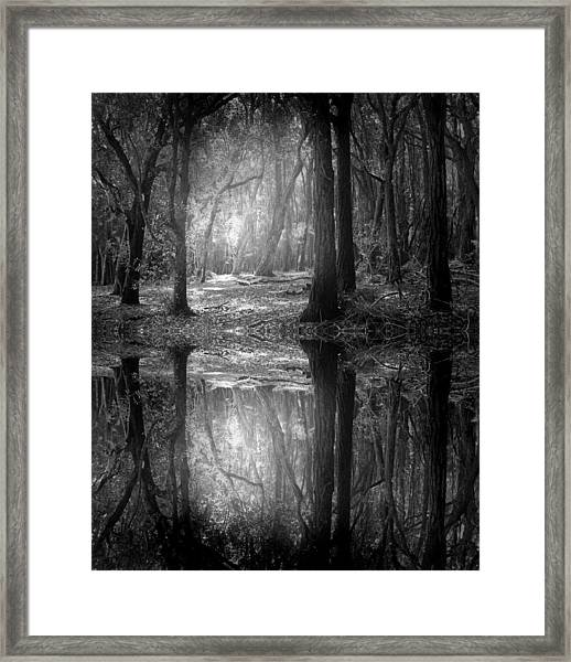 And There Is Light In This Dark Forest Framed Print