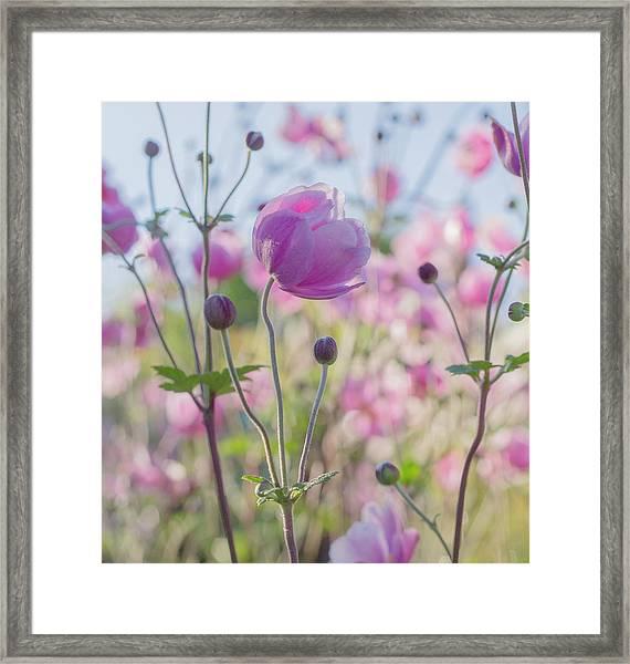 Anemone Softness  Framed Print