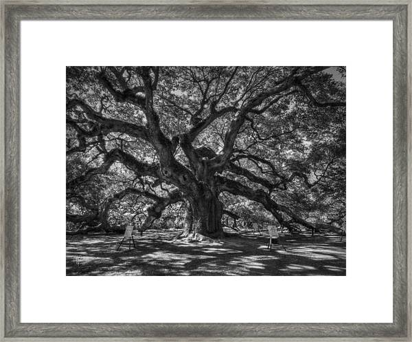 Framed Print featuring the photograph Angel Oak 002 by Lance Vaughn