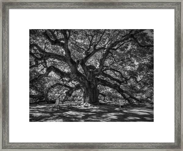 Angel Oak 002 Framed Print