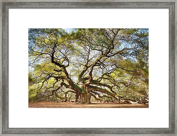 Angel Oak In Spring Framed Print