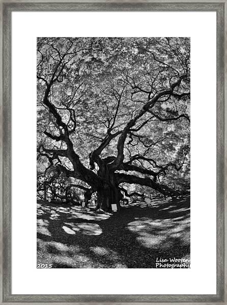 Angel Oak Johns Island Black And White Framed Print