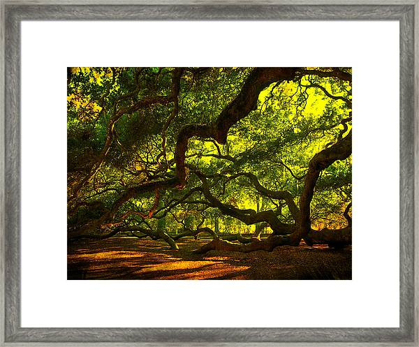 Angel Oak Limbs 2 Framed Print