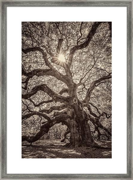 Angel Oak- Sun Beam  Framed Print