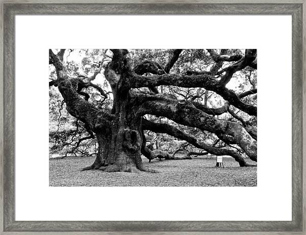Angel Oak Tree 2009 Black And White Framed Print