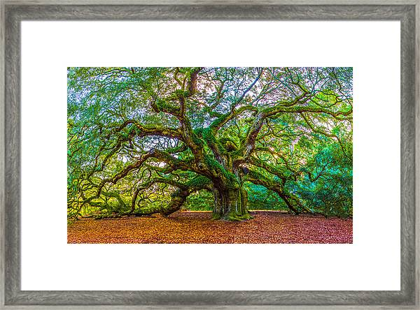 Angel Oak Tree Charleston Sc Framed Print
