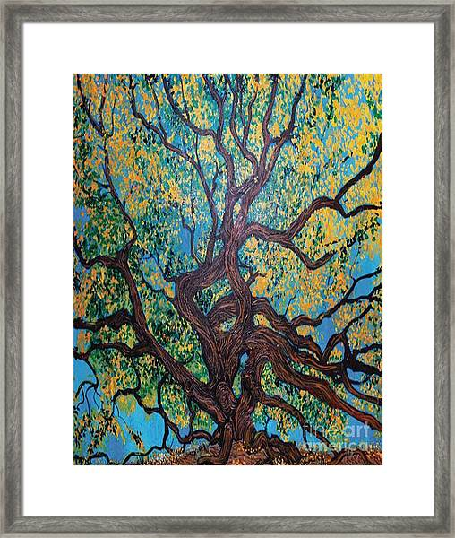 Angel Oak Young Framed Print