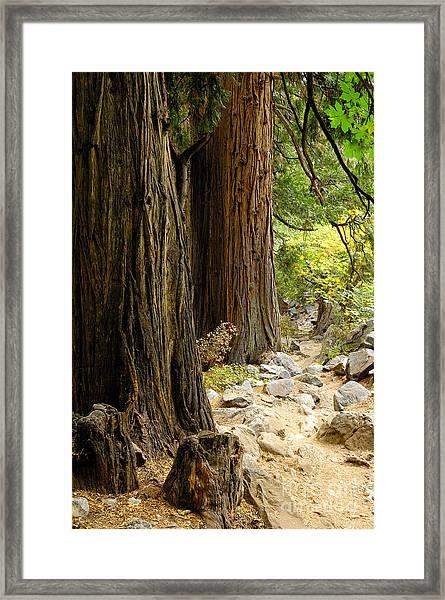 Angel Trail Framed Print by Marian Kraus