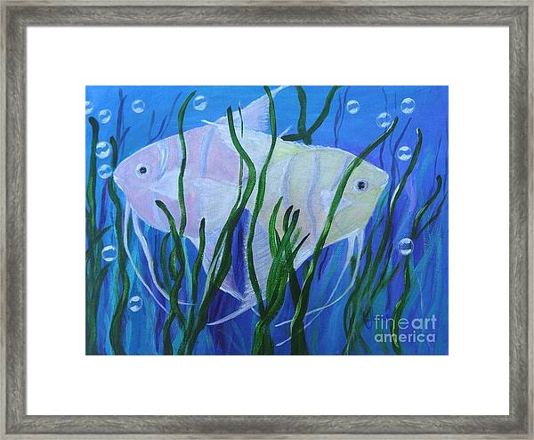 Angelfish Duo Framed Print