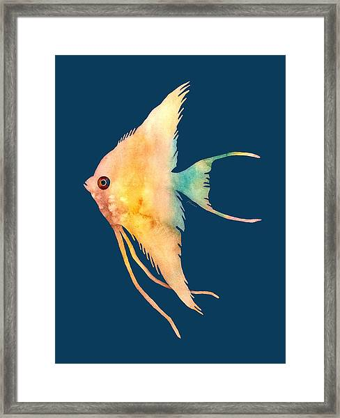 Angelfish II - Solid Background Framed Print