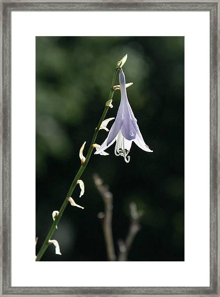 Angel's Fishing Rod Framed Print