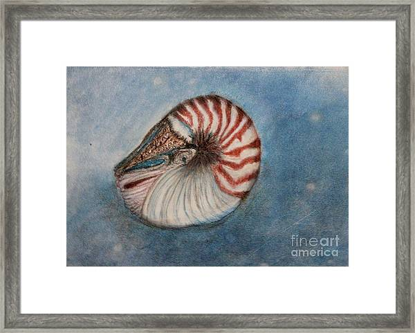 Angel's Seashell  Framed Print
