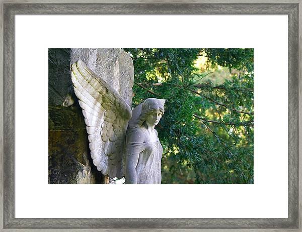 Angel's Wing Framed Print