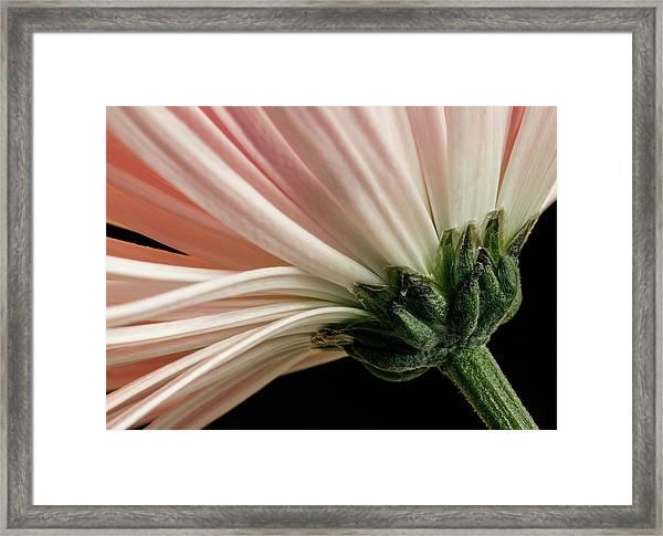 Angled Mum Framed Print