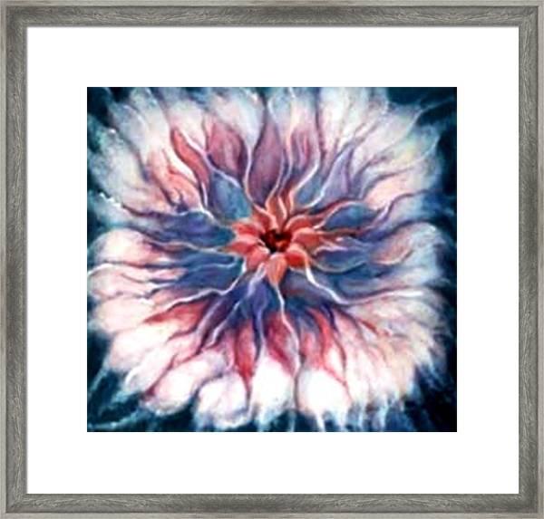 Angora Bloom Framed Print