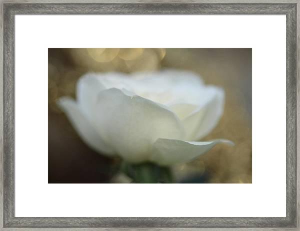 Angora Framed Print