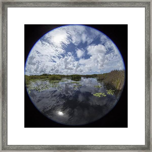 Anhinga Trail 86 Framed Print