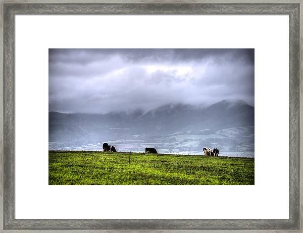 Animals Livestock-03 Framed Print
