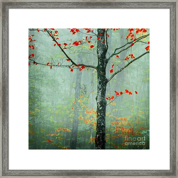 Another Day Another Fairytale Framed Print