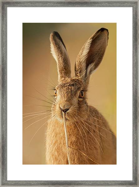 Another Fine Mess Framed Print