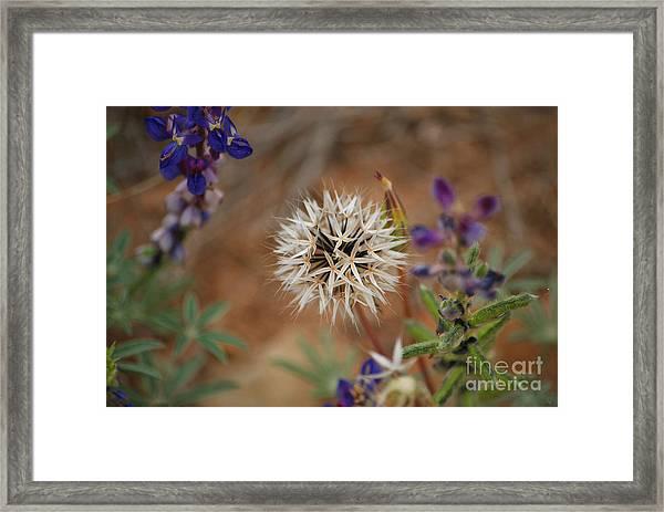Another White Flower Framed Print