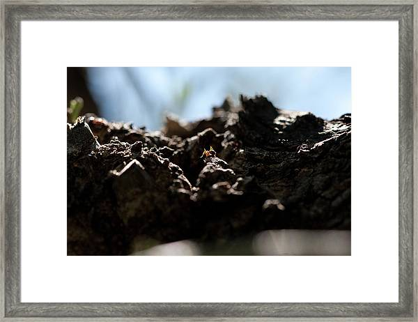 Ant Framed Print