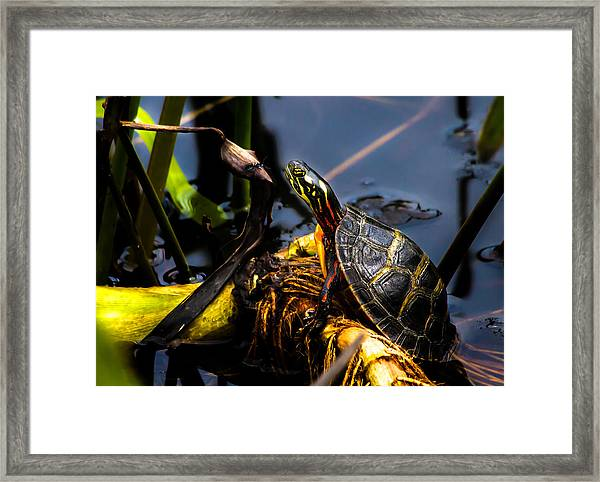 Ant Meets Turtle Framed Print