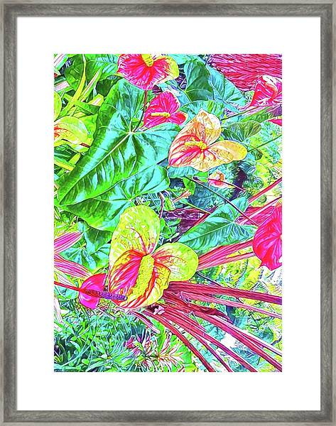 Anthuriums Pink And Turquoise Framed Print