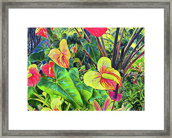 Anthuriums Yellow And Red Framed Print