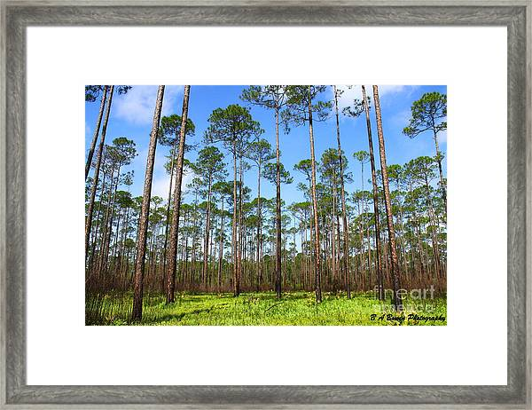 Appalachicola National Forest Framed Print