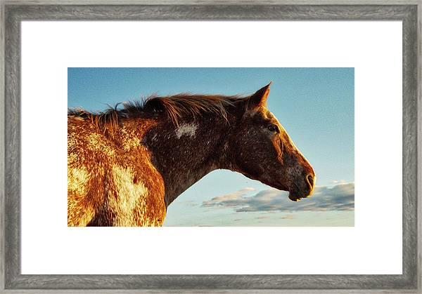 Appaloosa Mare Framed Print