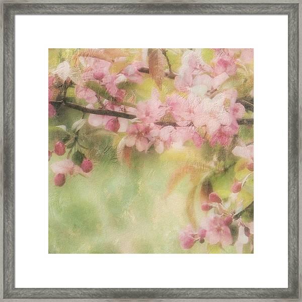 Apple Blossom Frost Framed Print
