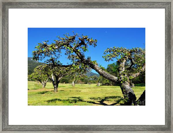 Apple Orchards Of Oak Glen Framed Print