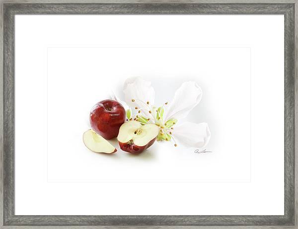 Apples And Blossom Framed Print