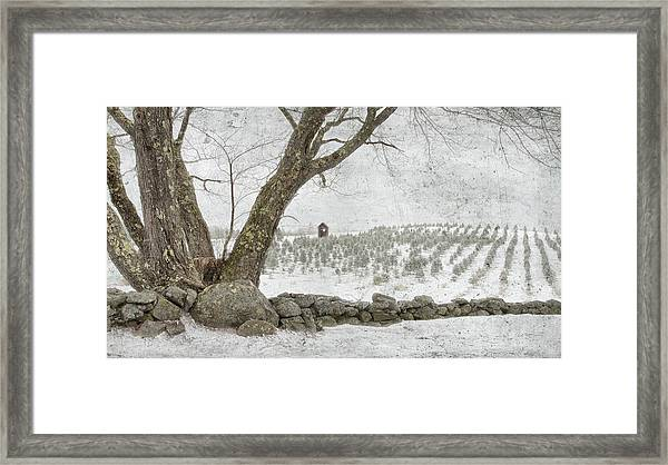 April Christmas Tree Farm Framed Print