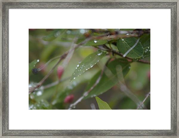 Framed Print featuring the photograph April Showers 1 by Antonio Romero