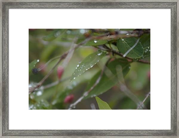 April Showers 1 Framed Print