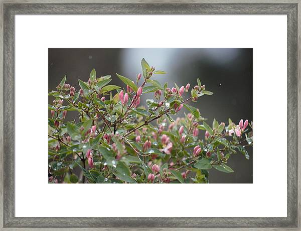 Framed Print featuring the photograph April Showers 10 by Antonio Romero