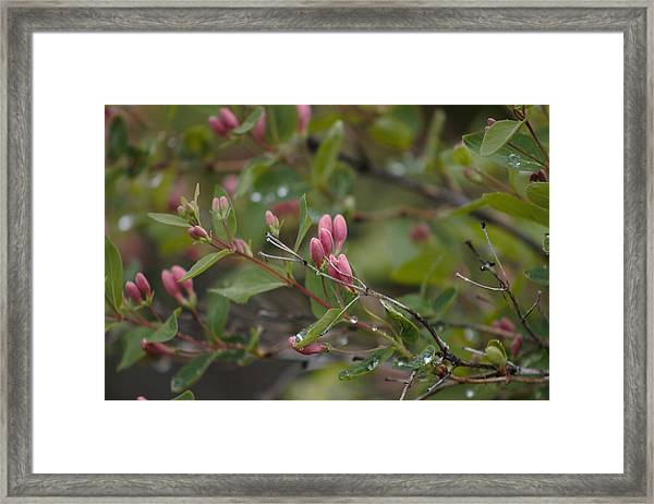 Framed Print featuring the photograph April Showers 2 by Antonio Romero