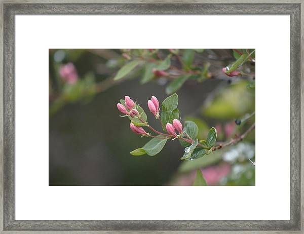 Framed Print featuring the photograph April Showers 3 by Antonio Romero
