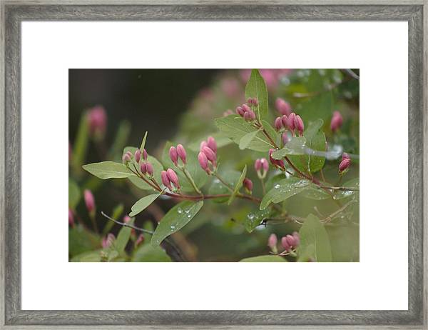 Framed Print featuring the photograph April Showers 4 by Antonio Romero