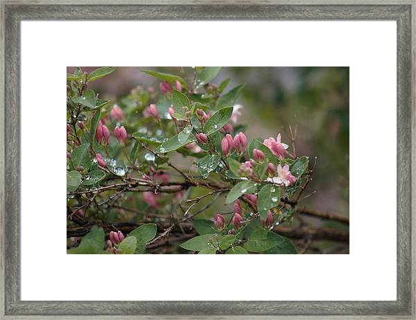 Framed Print featuring the photograph April Showers 6 by Antonio Romero