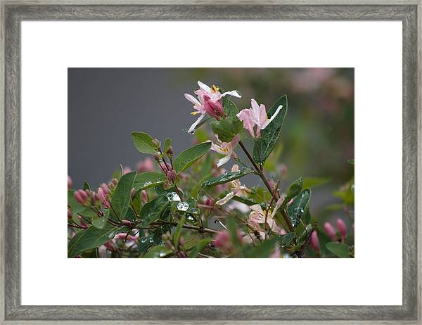 Framed Print featuring the photograph April Showers 7 by Antonio Romero