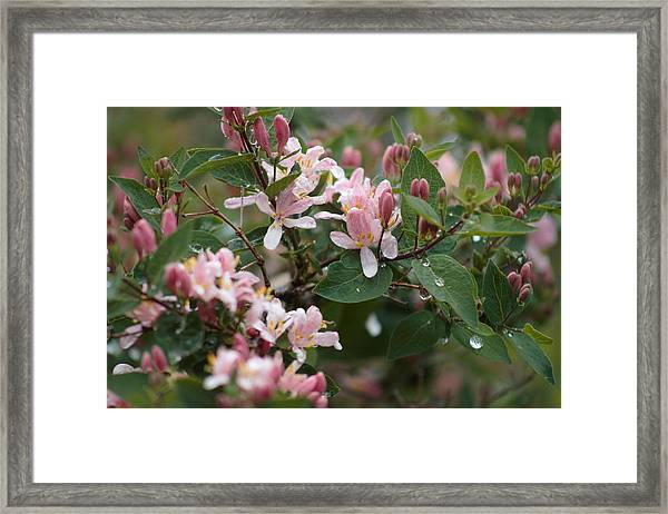 Framed Print featuring the photograph April Showers 8 by Antonio Romero