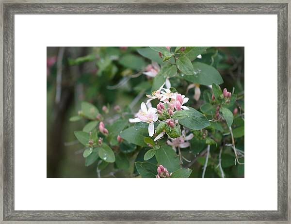 Framed Print featuring the photograph April Showers 9 by Antonio Romero