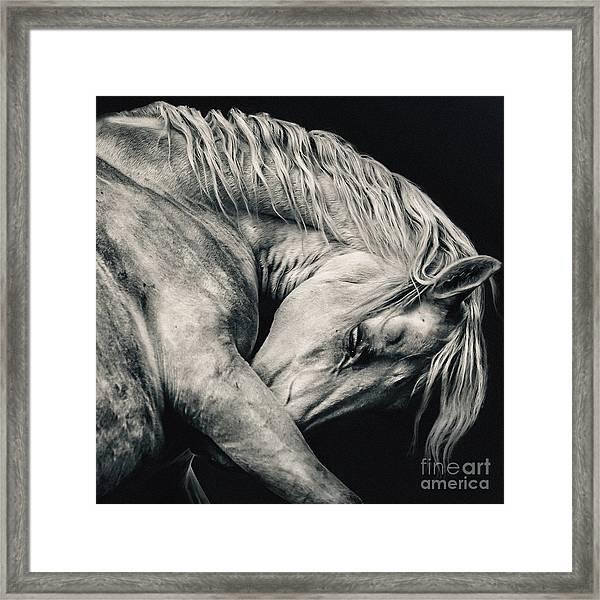 Arabian Beauty White Horse Portrait Framed Print