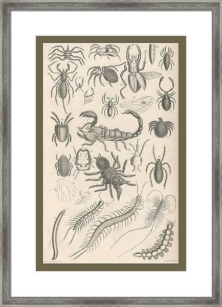 Arachnides. Myriapoda Framed Print