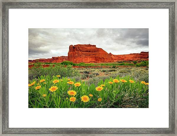Arches Wildflowers Framed Print